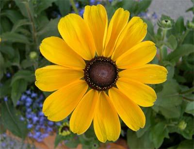 fiore_giallo.jpg